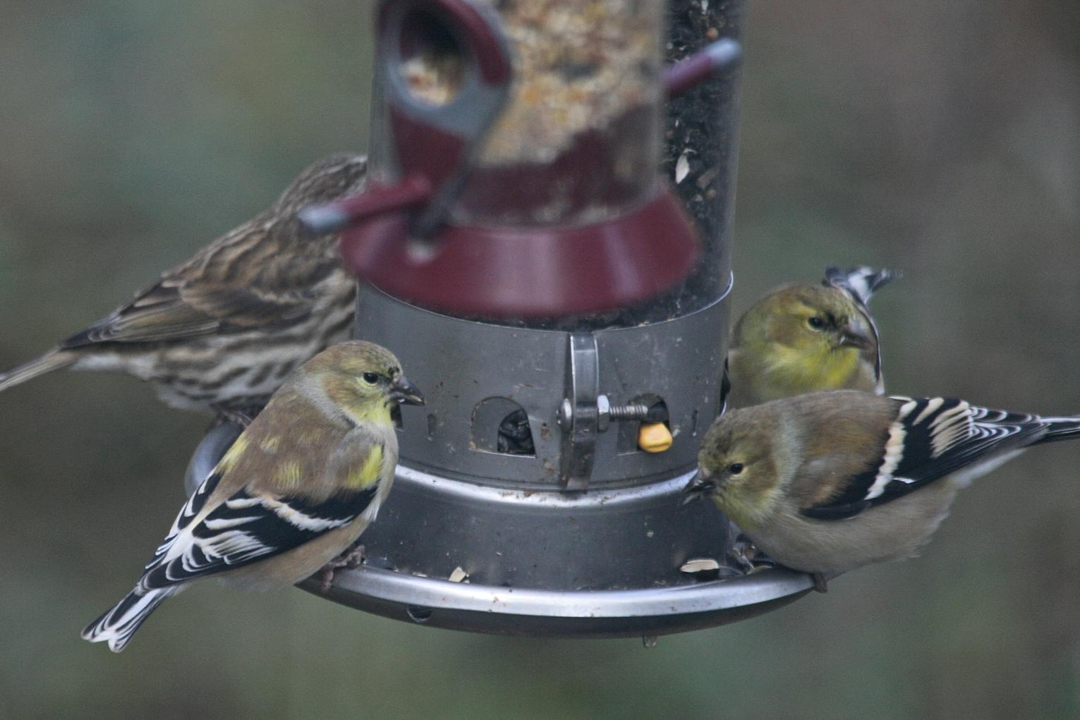 18th Annual Great Backyard Bird Count | Aspen Square Hotel ...