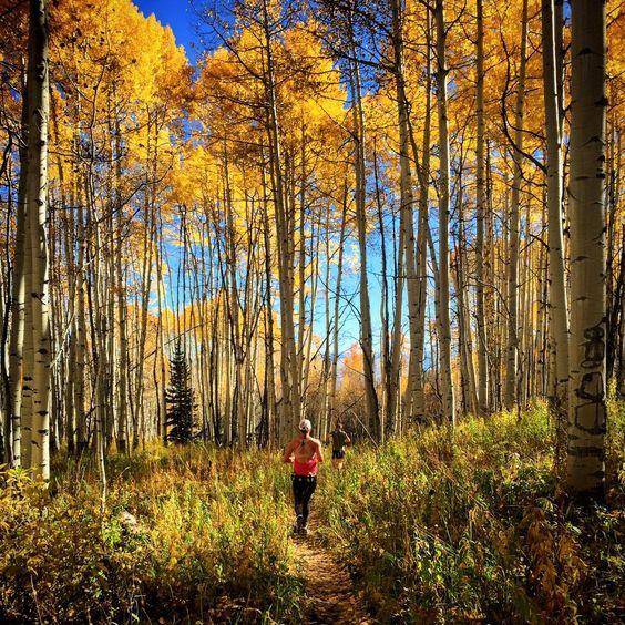 Image result for golden leaf marathon