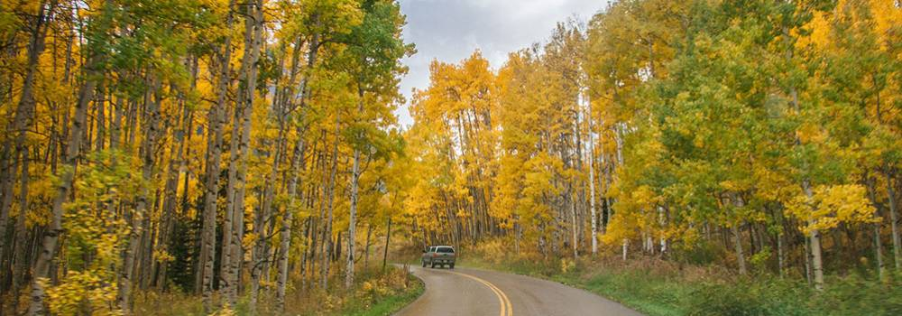 A vehicle driving along Highway 82 to Independence Pass surrounded by yellow aspen leaves